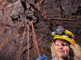 Diana sampling roots